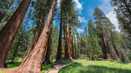 Hotely Sequoia National Park